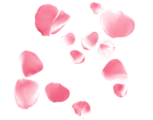 P tales de roses - Petale de rose bain ...