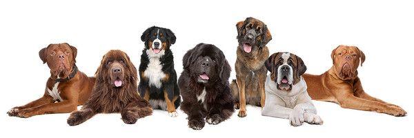 """Résultat de recherche d'images pour """"barre de séparation chien"""""""